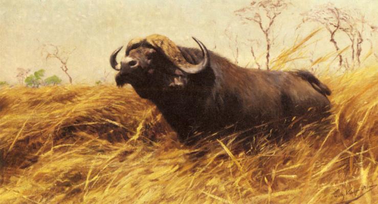 Фридрих Вильгельм Кунерт. Африканский буйвол