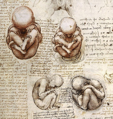 Леонардо да Винчи. Зарисовки плода в утробе