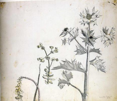 Lucien Freud. Plants