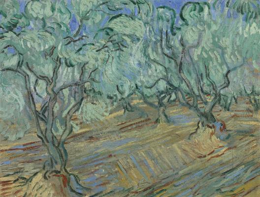 Винсент Ван Гог. Оливы,  светло-синее небо