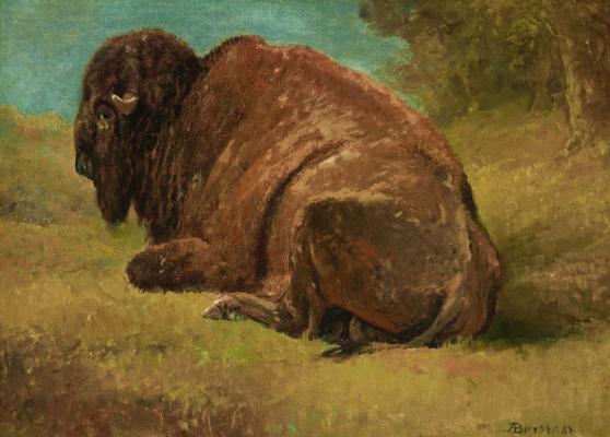Albert Birštadt. Buffalo