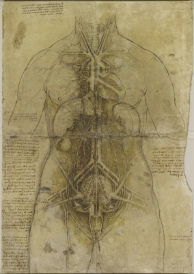 Leonardo da Vinci. Cardiovascular system and main organs of a woman