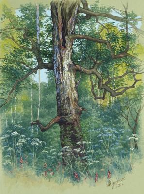 Alexander Mikhailovich Sushenok. Old birch
