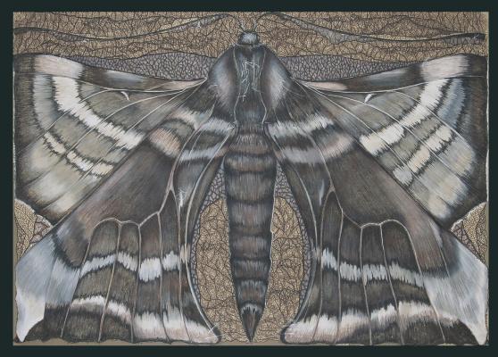 Anastasia Kalinskaya. Butterfly
