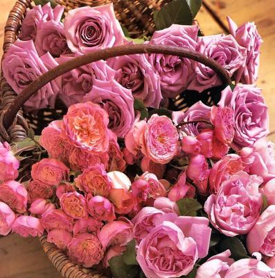 Мария Робледо. Розовые розы