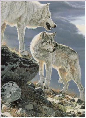 Аль Агню. Белые волки