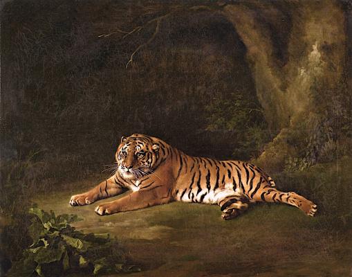 George Stubbs. Tigress