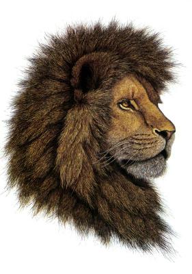 Грег Густавсон. Африканский лев