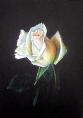 Sophie Wasilewska. White rose