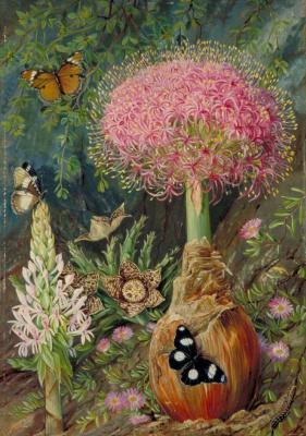 Марианна Норт. Буфана токсокара и другие цветы, Грейамстаун, Южная Африка