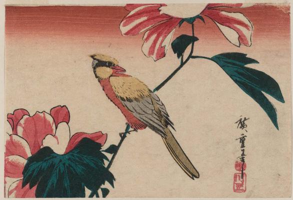 """Утагава Хиросигэ. Иволга и пион. Серия """"Птицы и цветы"""""""