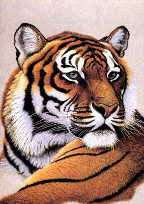 Грег Густавсон. Бенгальский тигр
