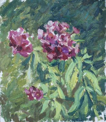 Tanika Yezhova. Phloxes