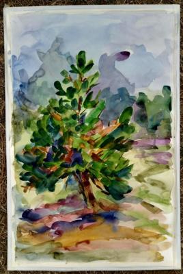 Lilia Georgievna Evsyukova. Young pine