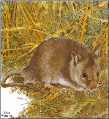 Тони Оливер. Австралийские вымирающие виды 16