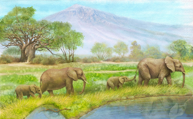 Vitaly Vasilevich Dudarenko. Elephant family