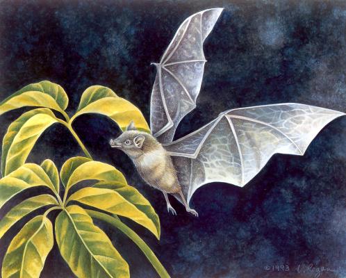 Лаура Риган. Большие крылья