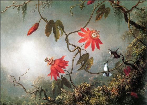Мартин Джонсон Хед. Страстоцветы и колибри