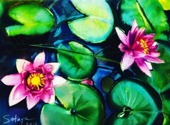 Andrey Valeriovich Sotnichenko. Water lilies
