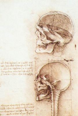 Leonardo da Vinci. Sketches of human skulls
