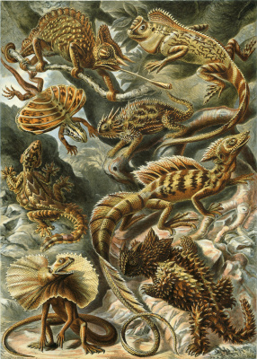 """Ernst Heinrich Haeckel. Lizards """"The beauty of form in nature"""""""