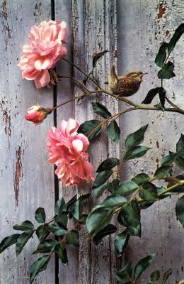 Карл Брендерс. Летние розы