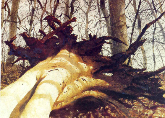 Jamie Wyeth. Fallen tree