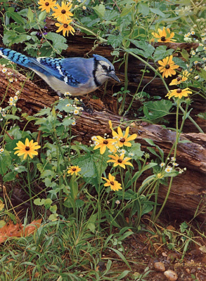 Джон Муллейн. Синяя птица