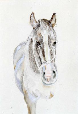 Lucien Freud. Stallion