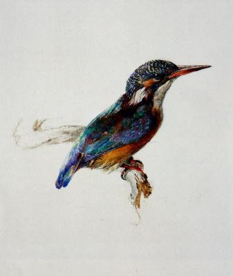 John Ruskin. Kingfisher