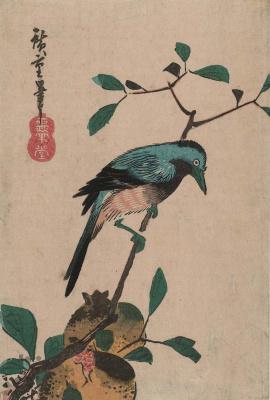 """Утагава Хиросигэ. Сойка на ветке и плоды граната. Серия """"Птицы и цветы"""""""