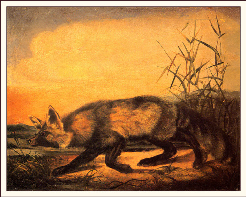 John James Audubon. Fox