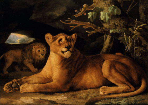 George Stubbs. Lion and lioness