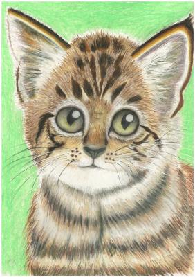 Ирина Владимировна Хазэ. Portrait of a kitten in pastel
