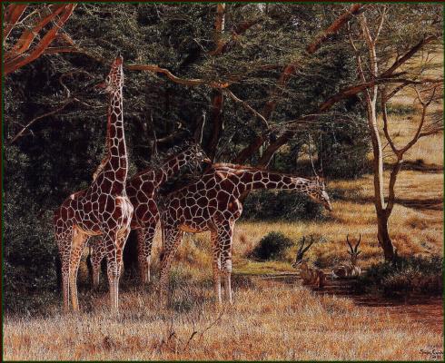 Саймон Комб. Жирафы