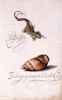 Балтазар ван дер Аст. Ящерица и раковина