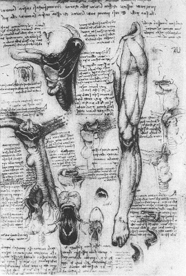 Leonardo da Vinci. Anatomical drawings (larynx and leg)