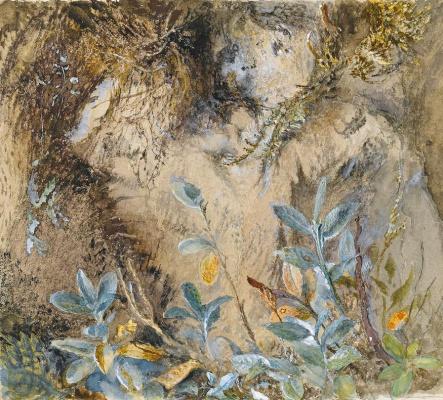 Джон Рёскин. Эскиз растений и мха на камнях