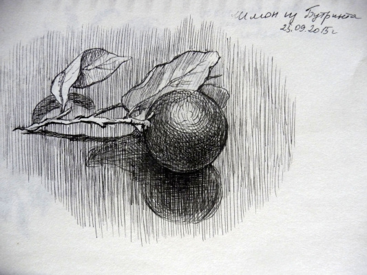 "Марианна Маслова. Из серии ""Албания в миниатюре"" - Мандарин с дерева в Бутринте"