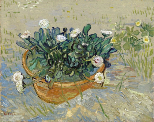 A pot of daisies