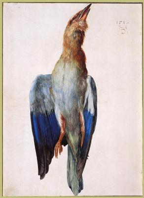 Albrecht Durer. Dead Bluebird