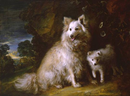 Thomas Gainsborough. Two dogs – beach and poppy (Pomeranian female puppy)