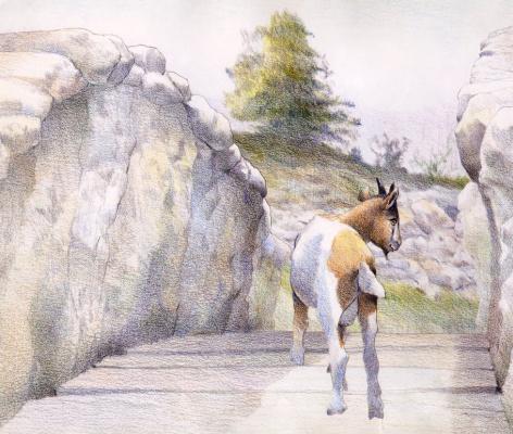 Дэвид Йоргенсен. Маленькая коза