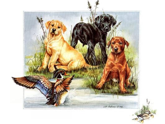 Кей Хоффман. Три собаки