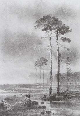 Pines near a swamp