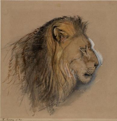 Джон Рёскин. Профиль льва