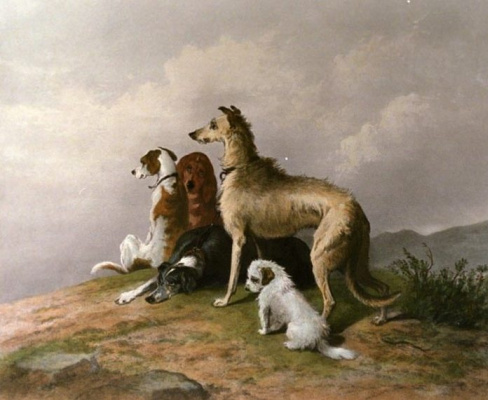 Edwin Henry Landseer. Mountain Dog (Hound, Scottish Greyhound, highland limits collie, Beagle, Terrier),