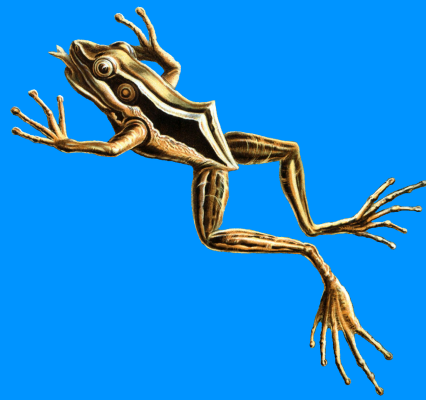 "Ernst Heinrich Haeckel. Red-eared frog. ""The beauty of form in nature"""