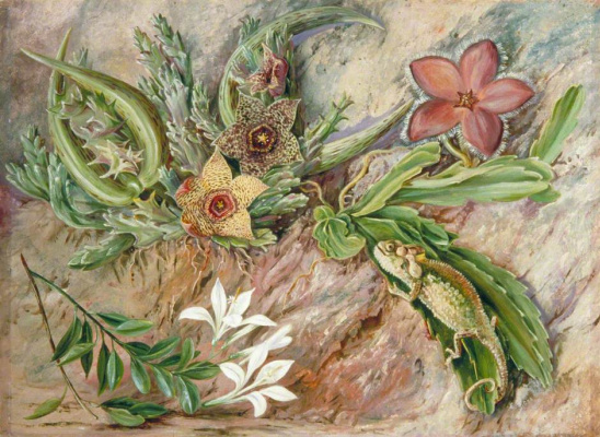 "Marianna North. Chameleon and flowers. ""South African features"""