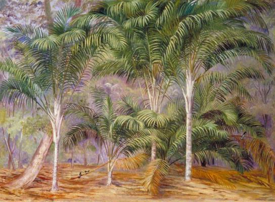 Marianna North. Palm trees in Mahe, Seychelles